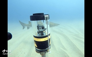 RUV shark survey