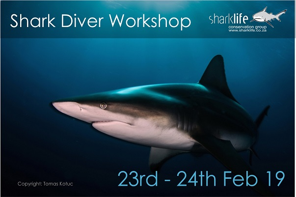 Shark Diver Workshop AD3