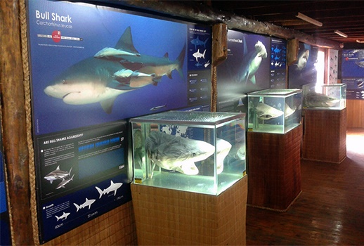 species displays